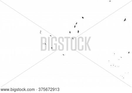 A Flock Of Numerous Black Starling Birds Flying In The Distance