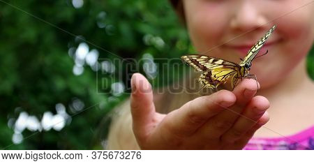 Butterfly Sitting On The Hand Of A Child. Child With A Butterfly. Swallowtail Butterfly On The Hand