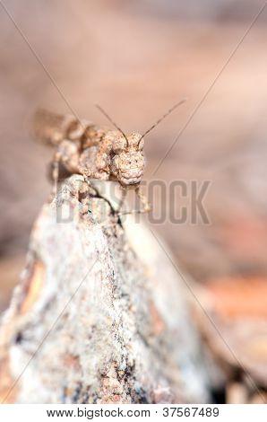 Grasshopper Vertical Portrait