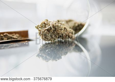 The Pot Leaves On Buds Thc Cbd. Cannabis Weed Bud And Grinder. Marijuana Nature Bud.