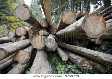 Woodpiles In Forest
