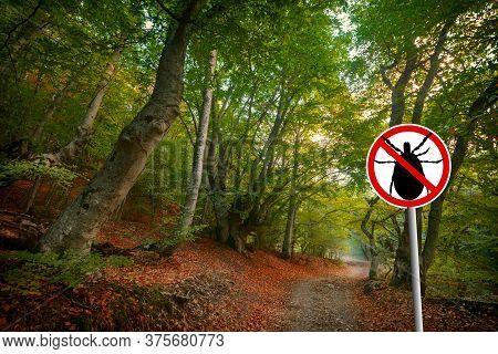 Warning Sign Beware  Of Ticks In Nature Forest. Transmitter Lyme Disease And Tick-borne Meningitis (