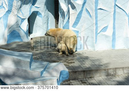 Russia, The City Of Novosibirsk, Zoo On June 16, 2014. A Polar Bear Mother With A Cub In The Aviary.