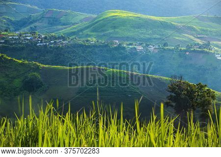 Mountain Farming, Most Beautiful Rice Fields In  Mountain Valley, Beautiful Natural Landscape In The