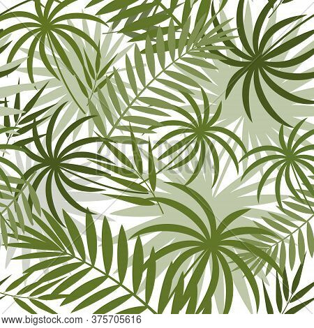 Pattern With Tropical Leaves Of Monstera, Palm And Bamboo Green On A White Background, Color Vector