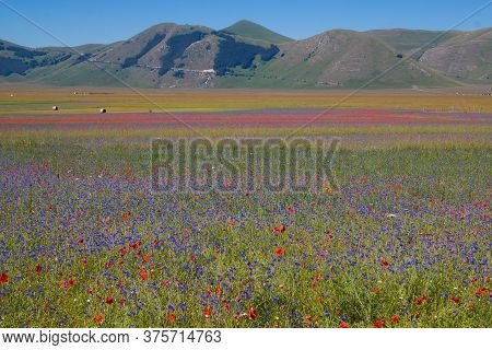 Castelluccio Di Norcia, 2020(umbria, Italy) - View Of The Famous Landscape Flowering With Many Color