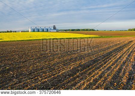 Agricultural Fields And Granaries On The Horizon. Rapeseed Blooms. Young Shoots Of Plants Sprout In