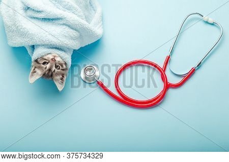 Kitten Vet Examining. Striped Gray Cat And Stethoscope On Color Blue Background. Kitten Pet Check Up