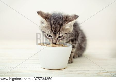 Kitten Eating. Striped Gray Kitten Eat Cats Food Feed From White Bowl With Cat Food On Wooden Floor.