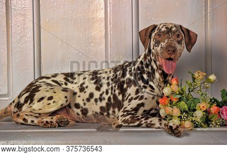 Dalmatian With Flowers