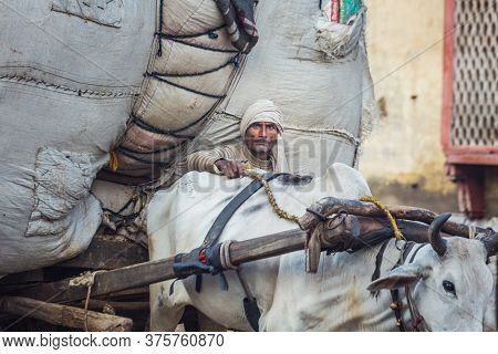 Agra, India - March 12 2017: Indian Man Drives A Bull Driven Overloaded Carrriage.
