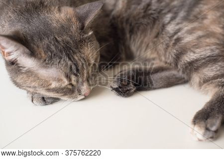 Young Cat Is Sleeping On A White Surface. Young Pet Is Resting