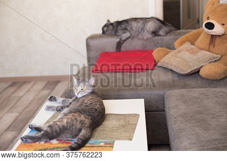 Young Cat Looking To Side Lying On Table And Cat Is Sleeping On The Couch