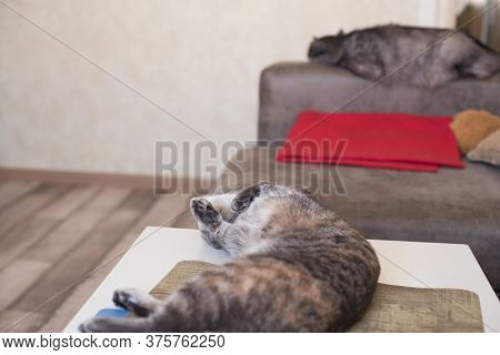 Young Cat Lies On A Table And A Cat Sleeps On Sofa