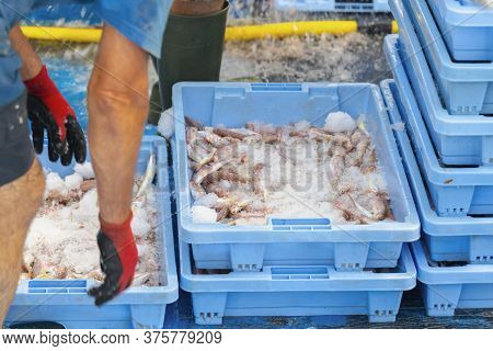 Blue Fish Market Box Filled With Red Mullet And Ice Surrounded By More Fish Market Boxes And Workers