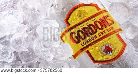 Bottle Of Gordon's London Dry Gin In Crushed Ice