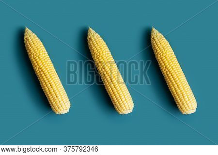 Minimal Pattern With Ripe Corn Cob At Blue Background. Flat Lay, Top View, Concept Of Harvest Blank