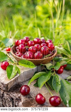 Bowl Of Fresh Sour Cherries With Leaves, Outdoor Shot