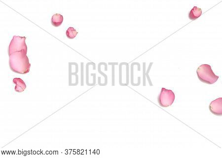 Blurred A Group Of Sweet Pink Rose Corollas On White Isolated Background With Softly Style And Copy