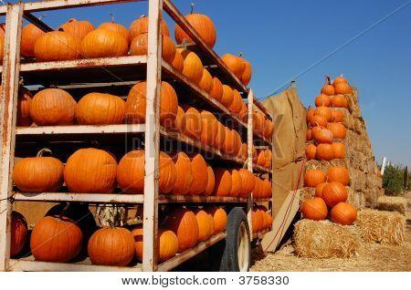 Pumpkintrailer
