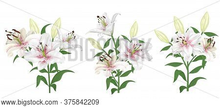 Lovely White With Pink Lilies. Flowers On A White Background. Bouquets, Branches Of Royal Lilies.