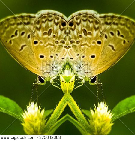 Mirror View Reflection Butterfly With Black Stripes Wing On Leaf Illustration. Space For Text In Gre