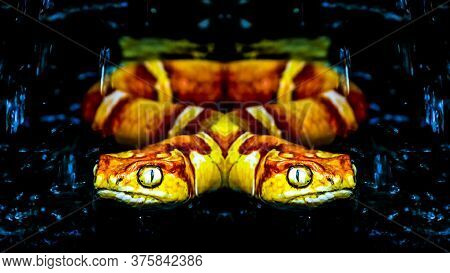 Mirror View Of Two Head Snake Illustration Isolated On Black Background.