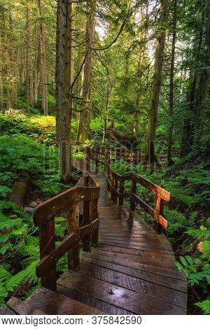 Wooden Pathway In The Rain Forest During A Vibrant Sunny Day. Taken On Giant Cedars Boardwalk Trail