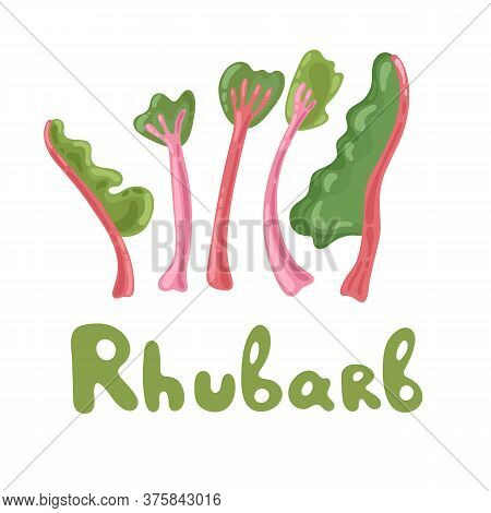 Rhubarb Stock Clipart. Vegetable Colorful Icon. Whole Rhubarb Vector Illustration, Cartoon Flat Icon