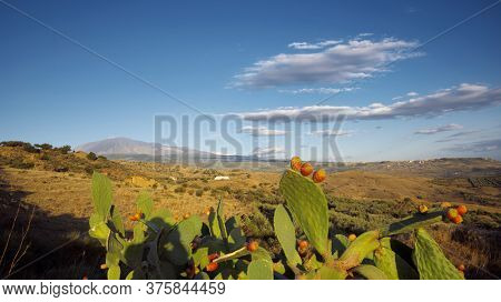 ripe fruits of prickly pears and Etna Mount in a countryside landscape of Sicily panoramic view