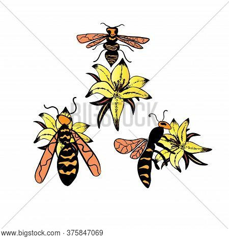 Set Of Three Wasps In Different Poses On Yellow Flowers Isolated On White Background In Hand Drawn