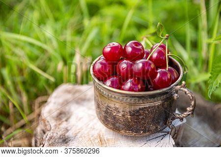 Sour Cherries In Summer Time In Vintage Silver Mug, Outdoor Shot