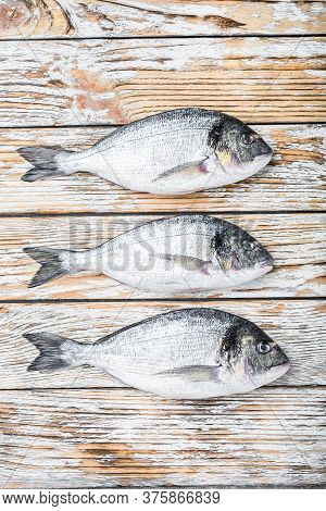 Set Of Raw Whole  Dorada Or Gilt Head Bream Fish Over White Wood Table Top View.