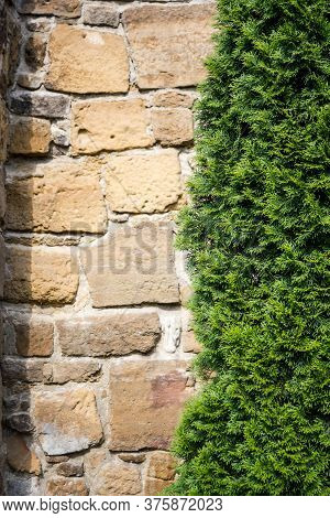 Vertical Shot To A Little Fir Tree In Front Of A Wall Made Frome Stone And Rocks