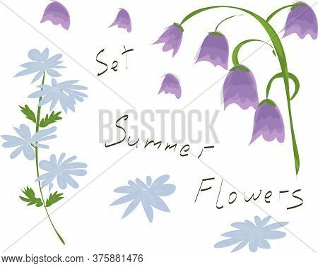 Blue And Violet Summer Flowers. Bluebells And Succory. Violet, Pink, Blue Colors. Watercolor, Marker