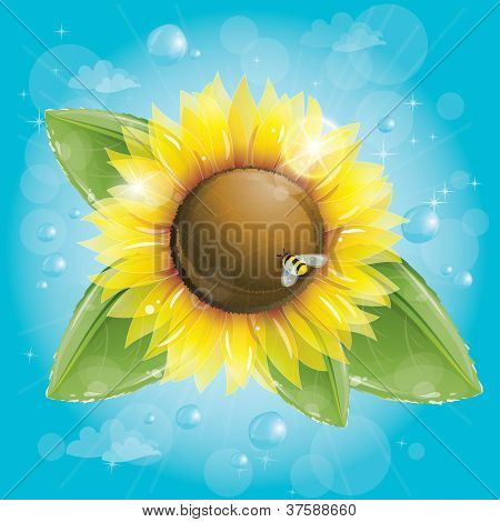 Beautiful Sunflower And Green Leaves Against Blue Sky