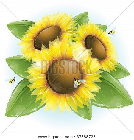 Beautiful Sunflowers And Green Leaves
