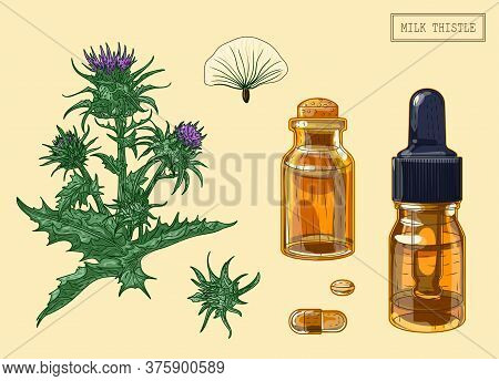 Medical Milk Thistle Branch And Vials, Hand Drawn Illustration In A Retro Style