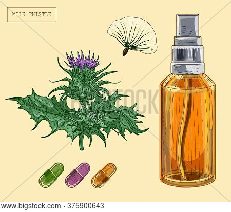 Medical Milk Thistle Plant And Sprayer Bottle, Hand Drawn Illustration In A Retro Style