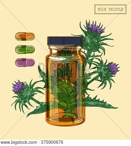 Medical Milk Thistle Plant And Glass Vial, Hand Drawn Illustration In A Retro Style