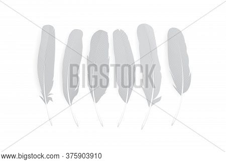 Realistic Feathers Isolated On White Background. Birds Plumage In Abstract Style. Isolated Vector.
