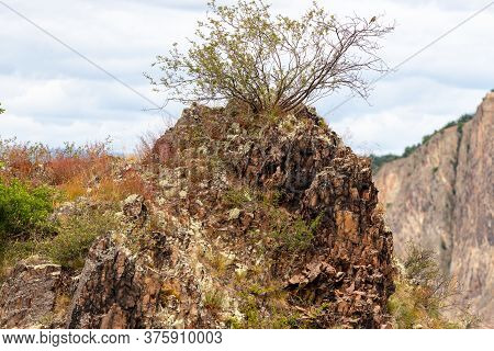 View At Rock With Sparse Vegetation And Bush Growing On Top