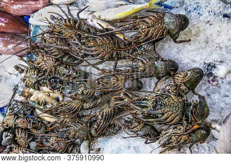 Fresh crabs on open fish market in Hurghada city, Egypt