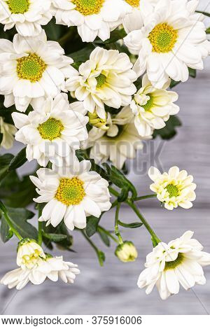 A Bouquet Of White Bush Chrysanthemums On A Gray Background.