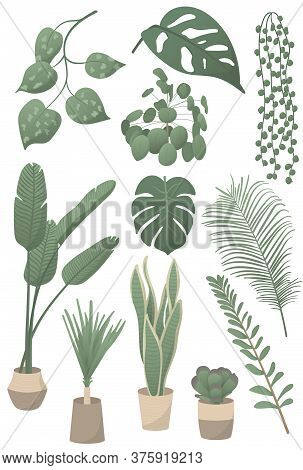 Set Of Vector Illustrations Of Home Plants: Monstera Leaf, Pilea Peperomioides, String Of Pearls, Po