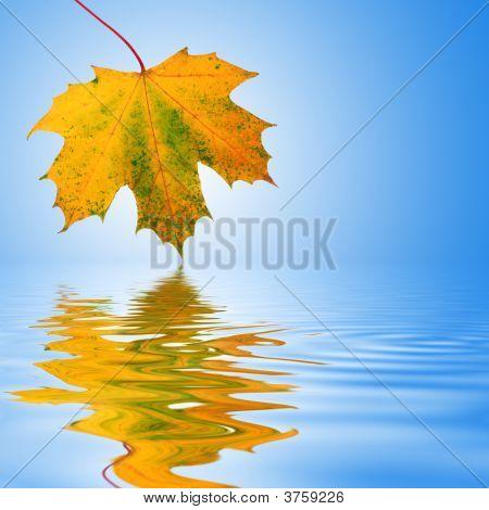 Autumn Leaf Beauty