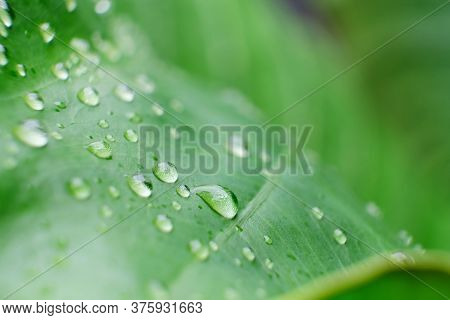 Close Up Waterproof On Green And Natural Background