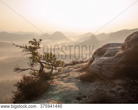 Lone Pine Over A Cliff In The Mountains At Dawn. Landscape Of Natural Wild Nature In Morning Sunligh