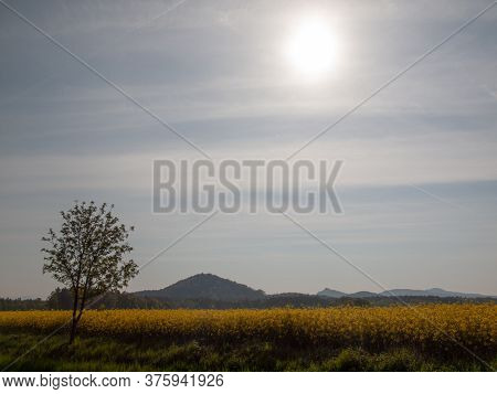 Fields Of Oilseed Rape, Hills And Bright Clear Sky Without Clouds In The Background.