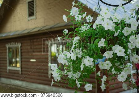 Petunia Flowers In Pots. Flower Pot Hanging On The Background Of A Wooden House